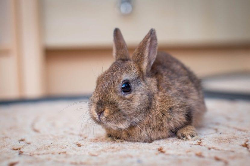 El conejo toy es muy simpático