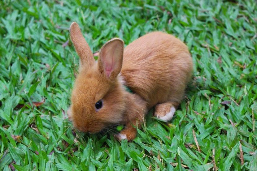 Los conejos tienen que estar libres