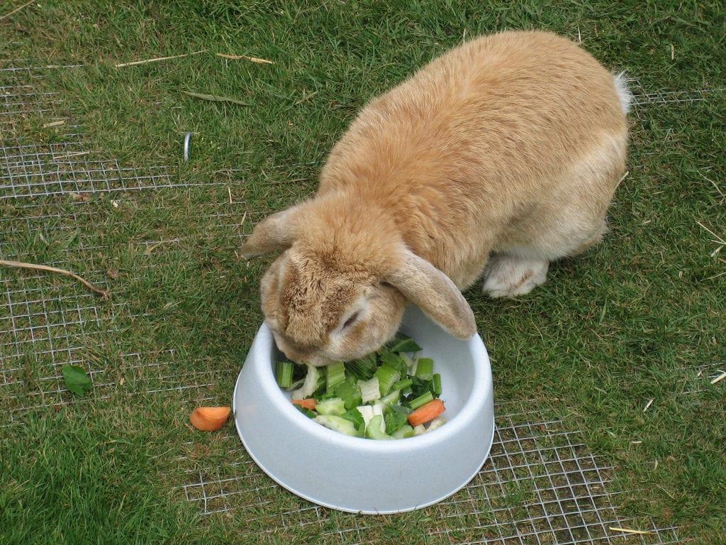 Los conejos deben comer su pienso, frutas y verduras frescas
