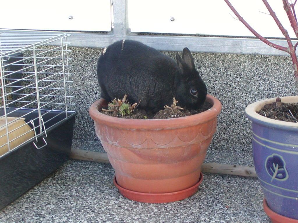 A los conejos les encanta el tacto de la tierra