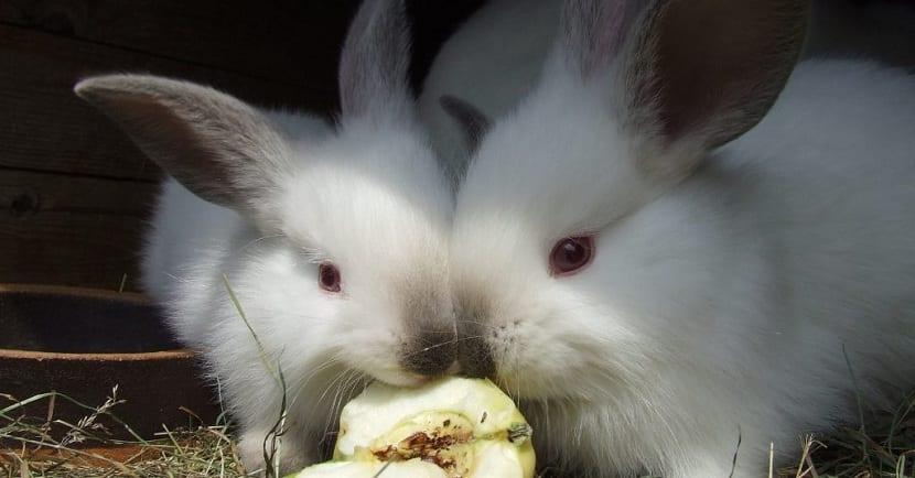 comida de conejos