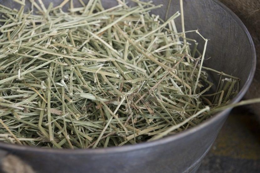 El heno es hierba seca que sirve como alimento para animales