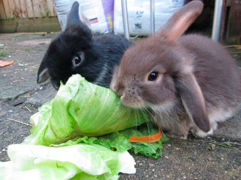 que come un conejo