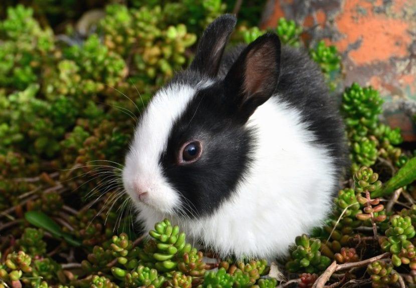 Los conejos son animales que deben vivir libres
