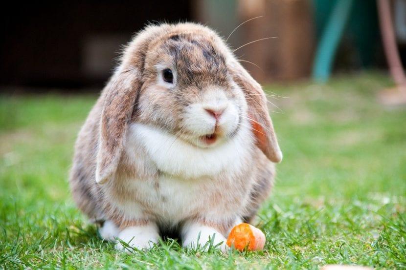 Los conejos no han de vivir encerrados