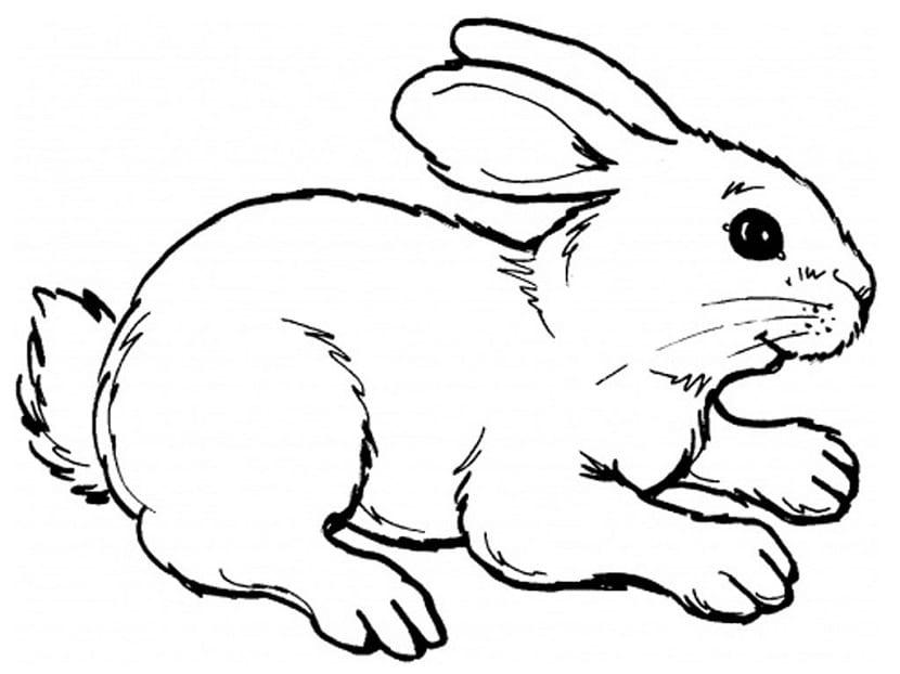 Conejos para colorear. Plantillas de todo tipo para niños