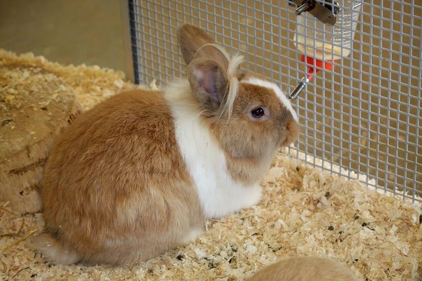 Heno para las jaulas de conejos