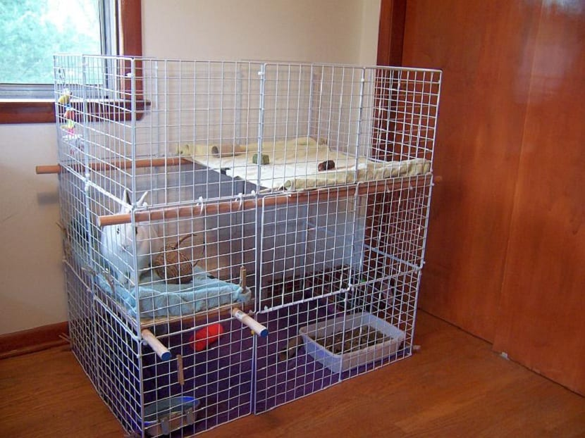 Jaula escalonada para conejos