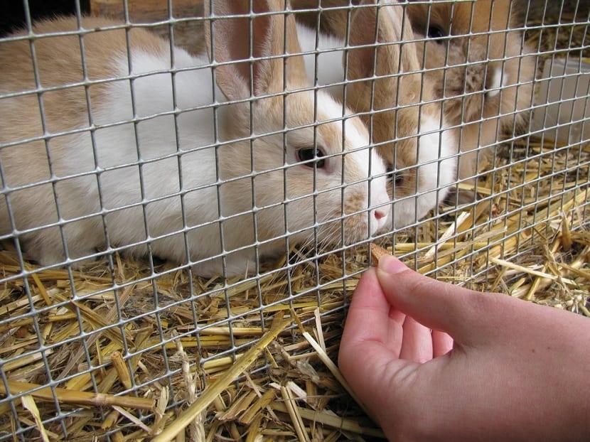 Jaulas de exterior para el conejo