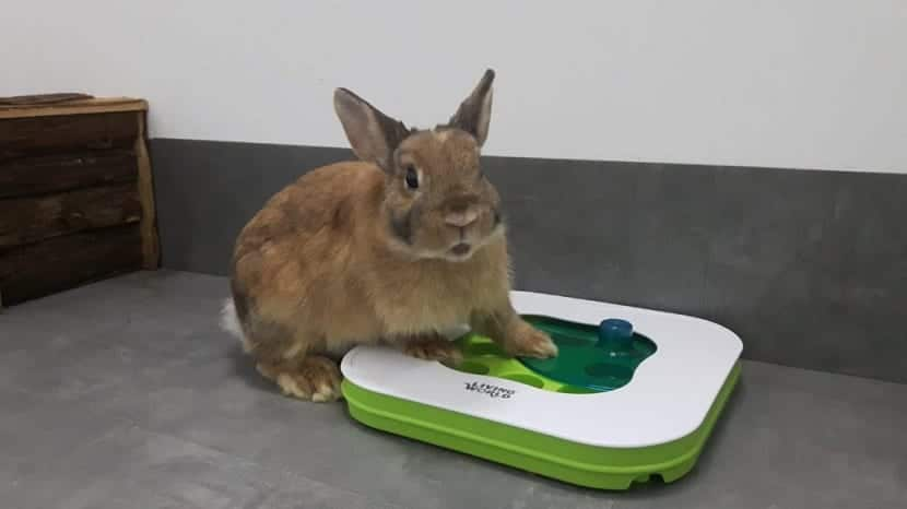 Juguete para conejos