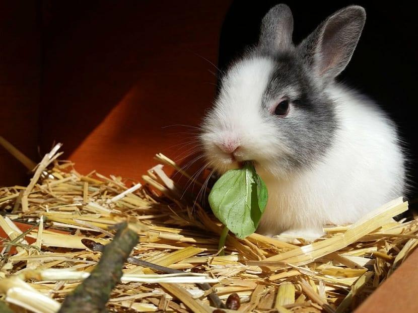 Madriguera para conejos