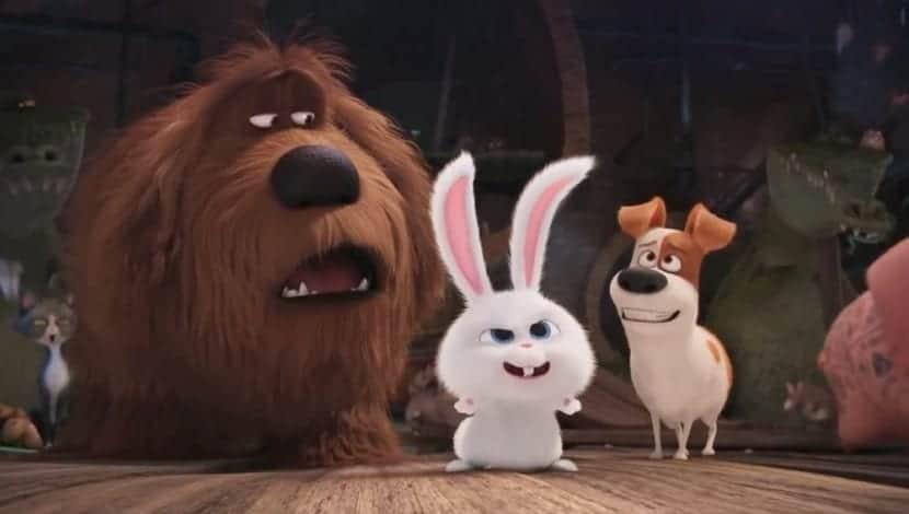 Películas de conejos