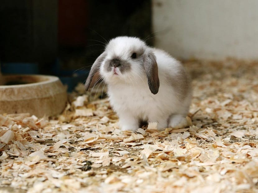 Suelo de paja para conejos
