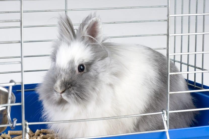 Tamaño de las jaulas para conejos