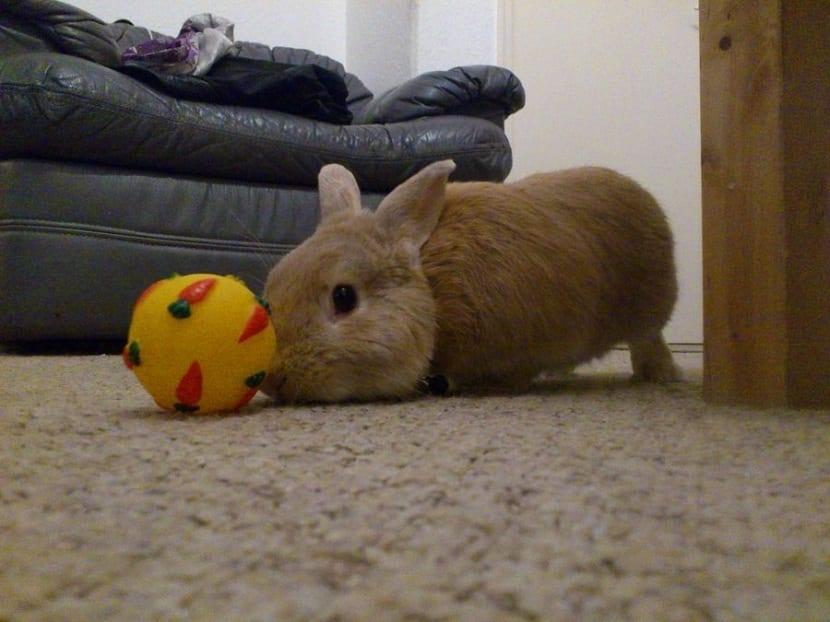 Bola para conejos