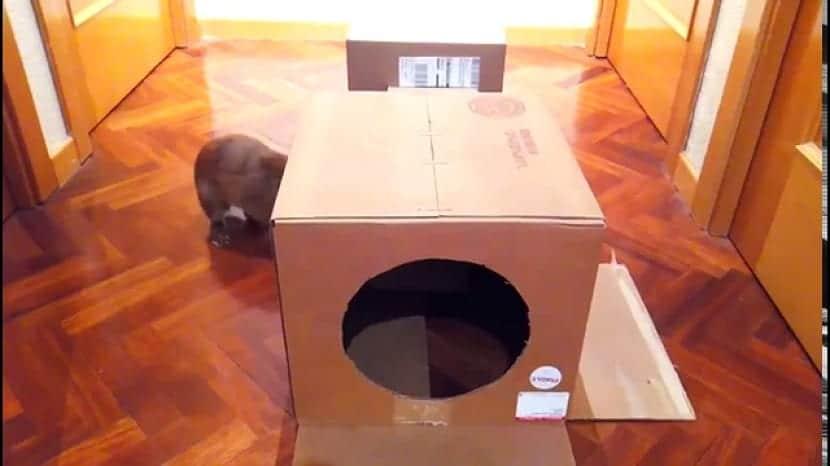 Castillo para conejos