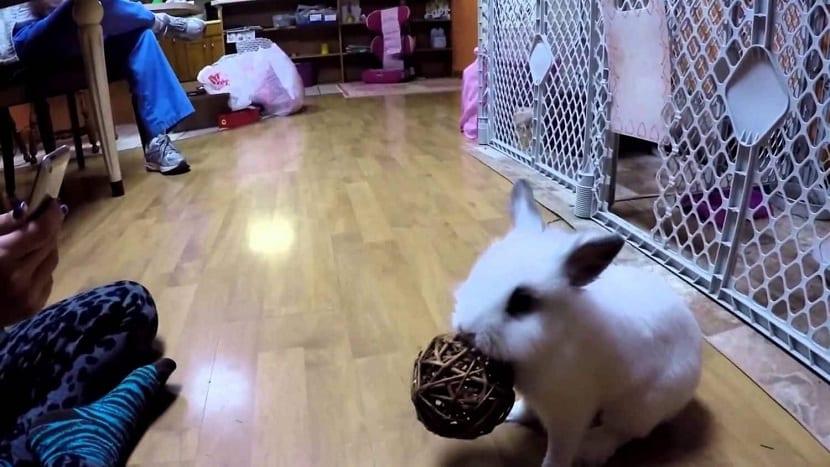 Conejo mordiendo juguetes