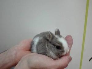 Conejo super toy en la mano