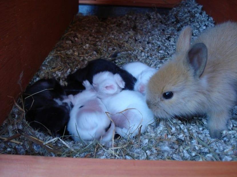 Madre cuidando de sus conejos