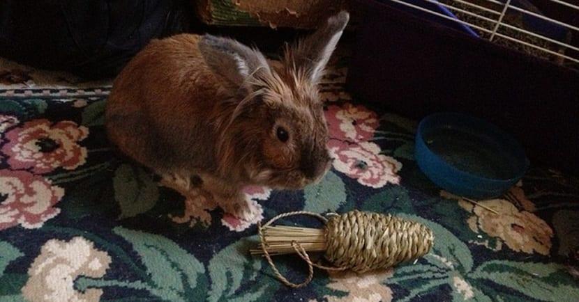 Variedad de juguetes para conejos