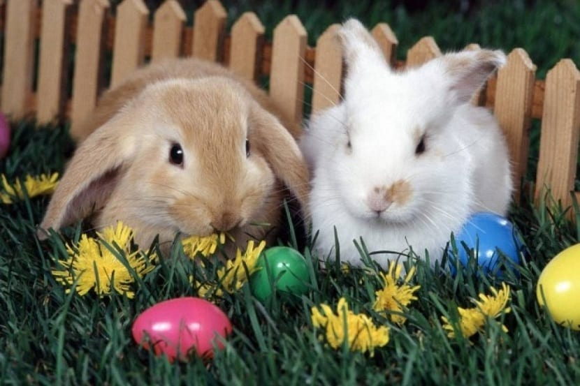origen del Conejo de Pascua