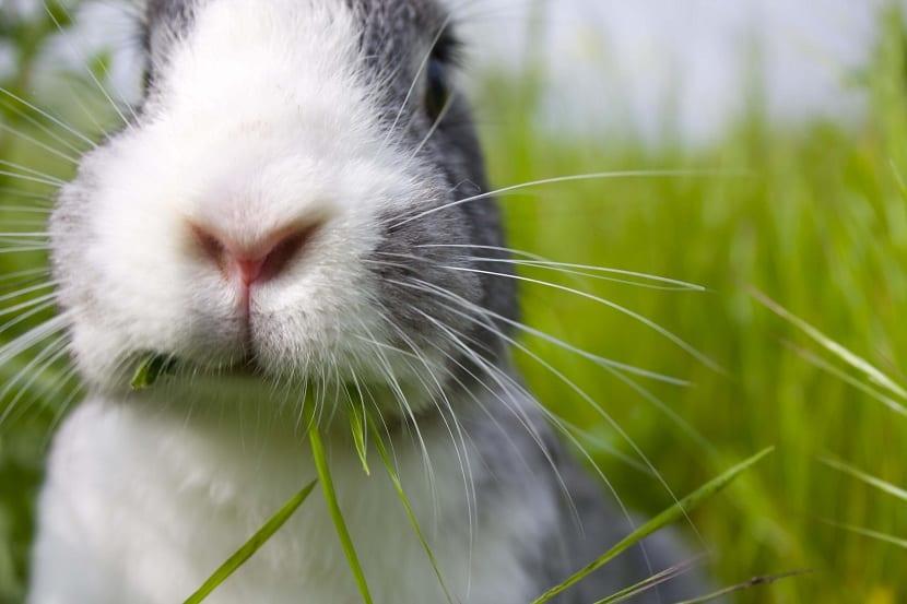 Alimentación de un conejo