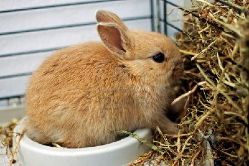 Alimentación del conejo