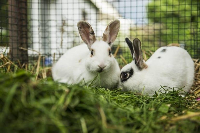 Conejo en jaula