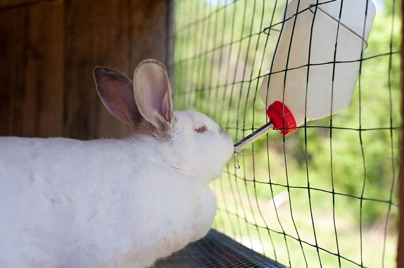 Tipos de bebederos para conejos