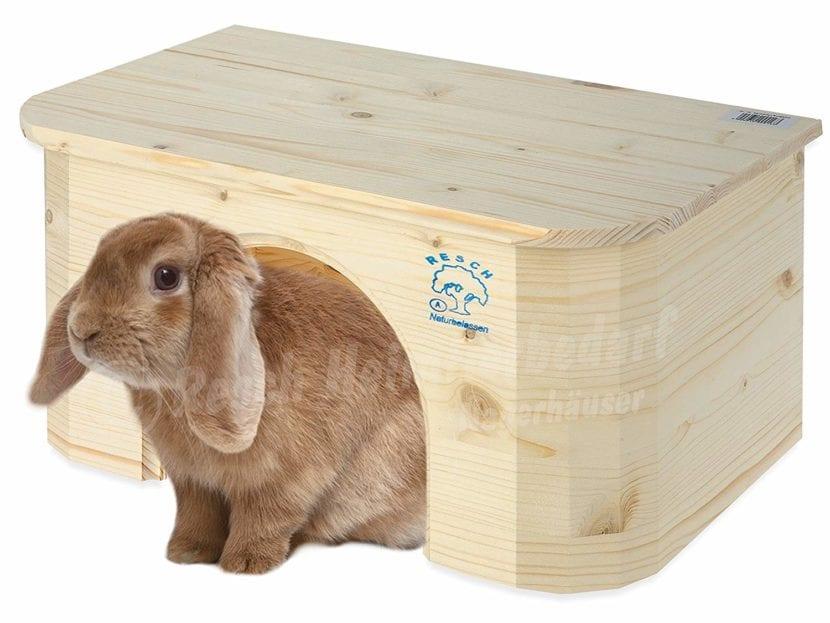 Los conejos pueden sentirse mejor en una casita