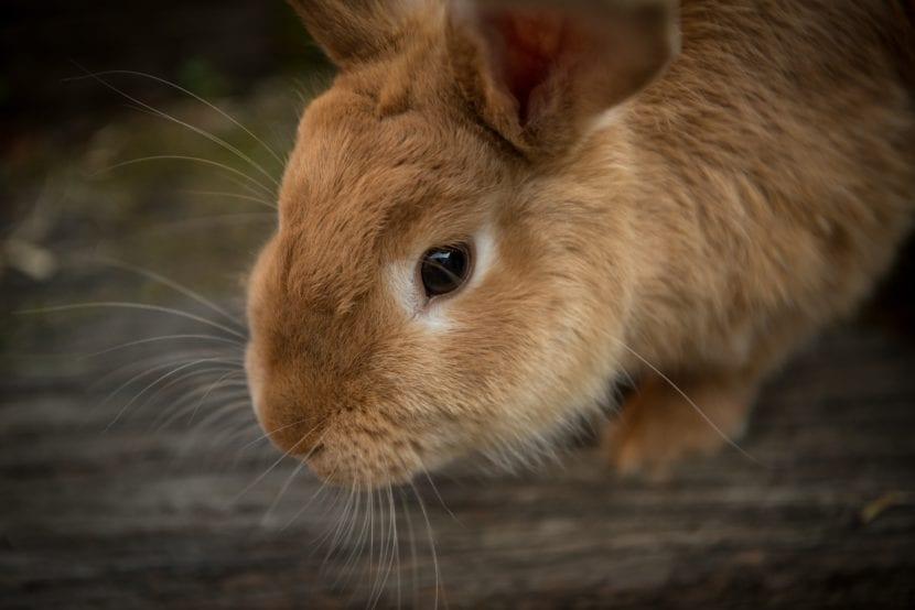 Compra una casa para tu conejo, y lo harás feliz