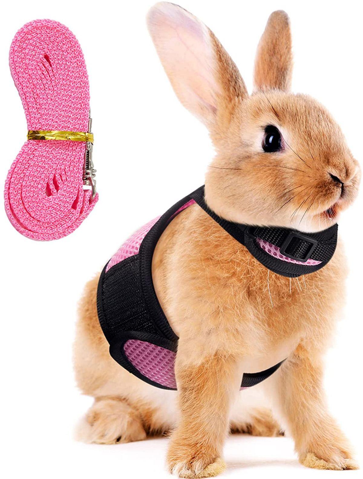 Cómo elegir un arnés para conejo