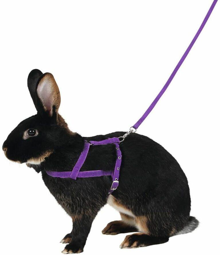 arnés conejos