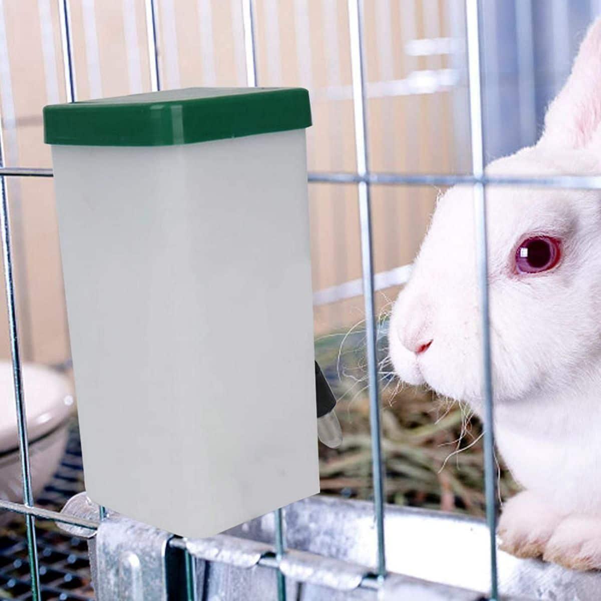 cuánto debe beber un conejo al día