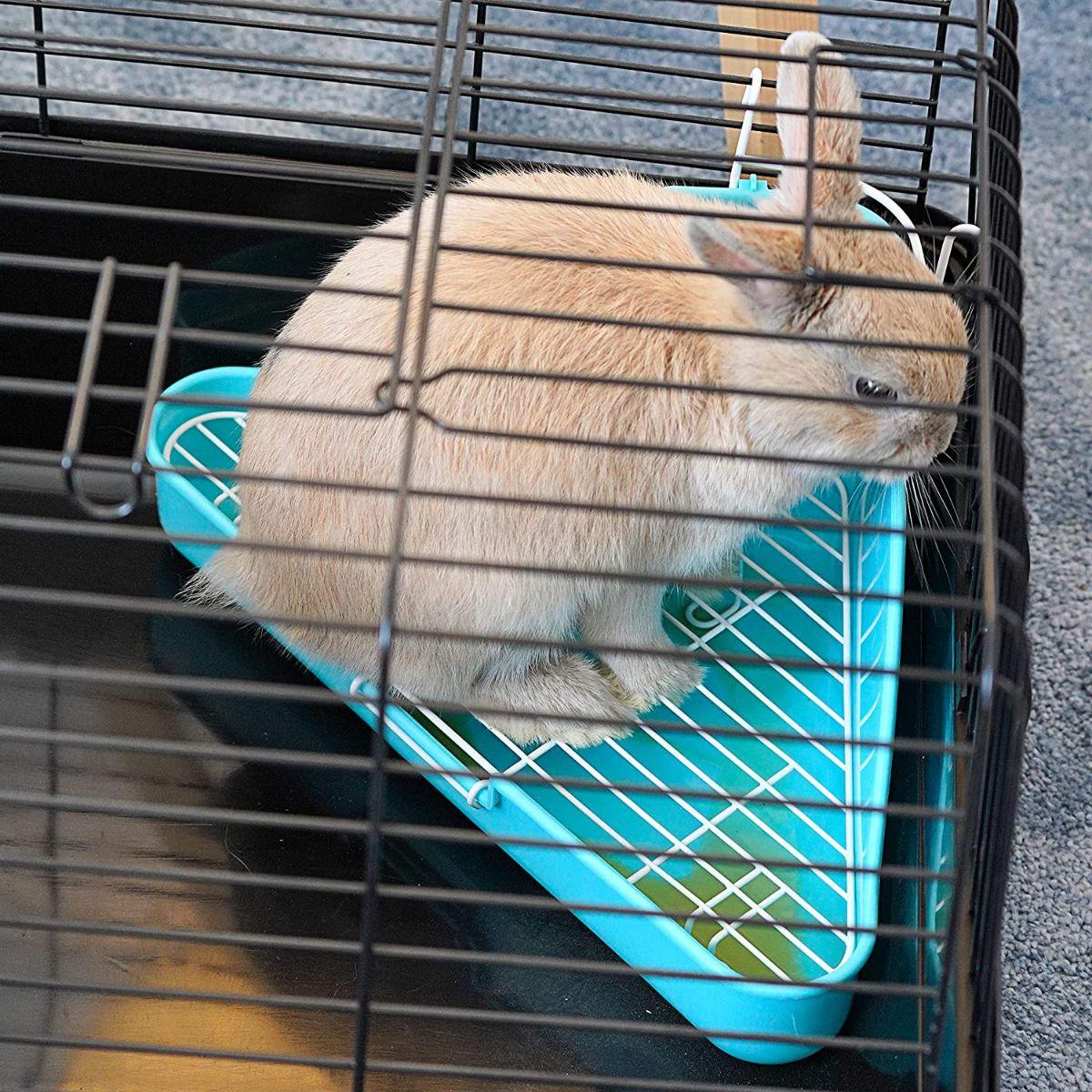 Cómo hacer que el conejo aprenda a usar la esquinera