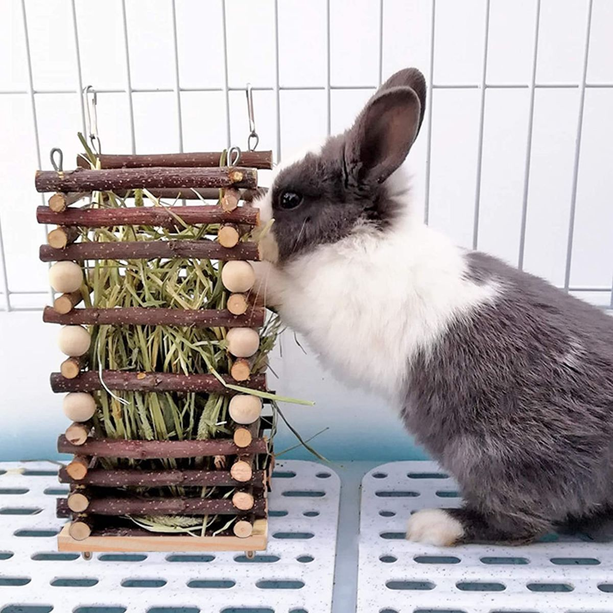 Precio de un comedero para conejo