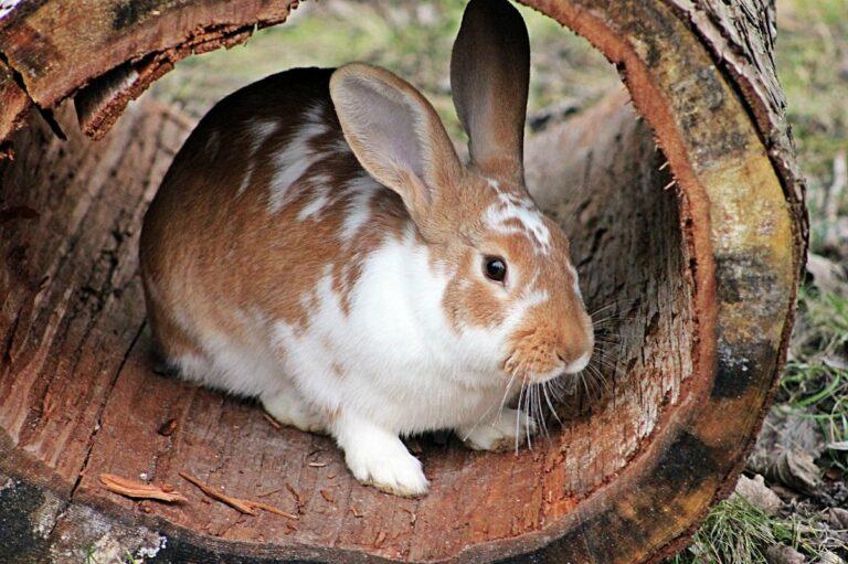 cortauñas conejo
