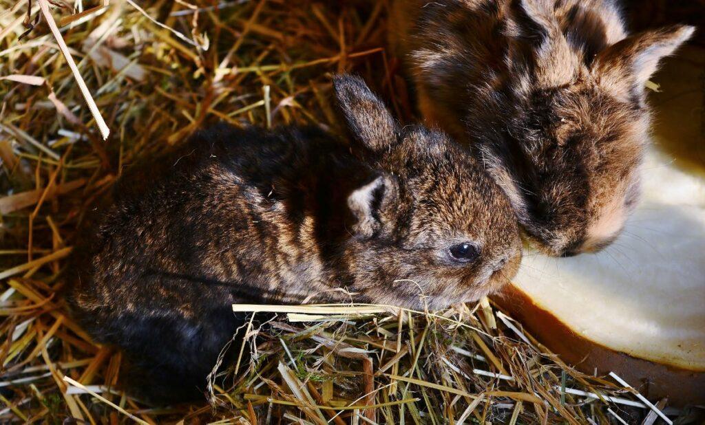 malta para conejos